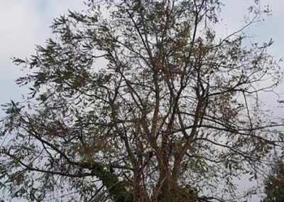 Tree surgery Lincoln