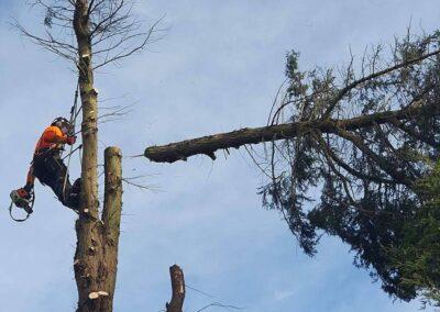 Tree Services Gainsborough