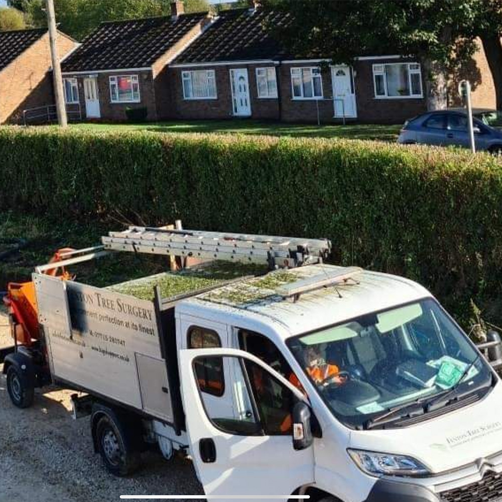Tree Services Lincoln